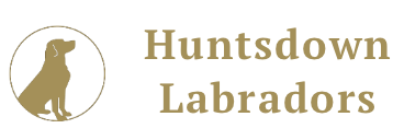 Huntsdown Labrador Retrievers